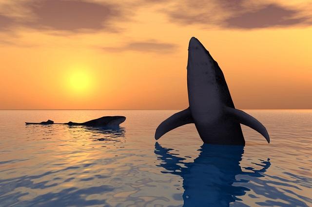 Ballenas en el mar frente al atardecer